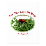 Insectos rojos del amor de la hormiga del terciope postales
