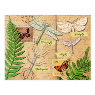 Insectos y el helecho del polypody común tarjeta postal