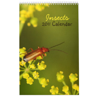 Insects 2011 Calendar