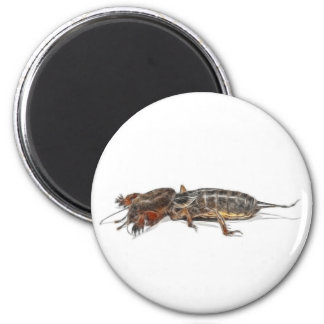 INSECTS 2 INCH ROUND MAGNET