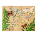 Insects and the common polypody fern post cards