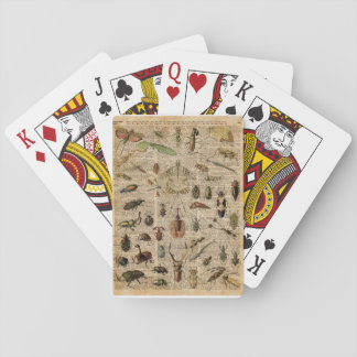 Insects Bugs Vintage Illustration Dictionary Art Playing Cards