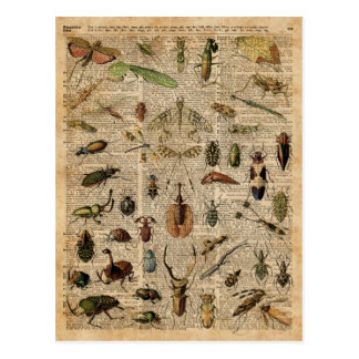 Insects Bugs Vintage Illustration Dictionary Art Postcard