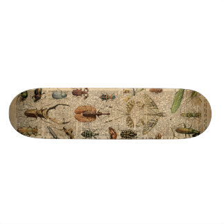 Insects Bugs Vintage Illustration Dictionary Art Skateboard Deck