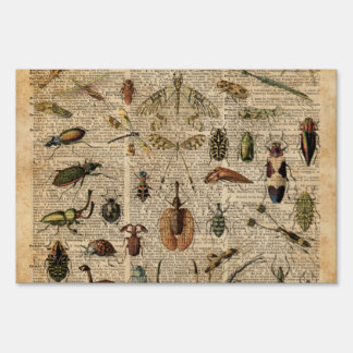 Insects Bugs Vintage Illustration Dictionary Art Yard Sign