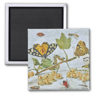 Insects Crawling 2 Inch Square Magnet