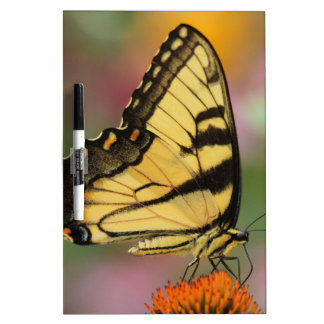 Insects Dry Erase Board