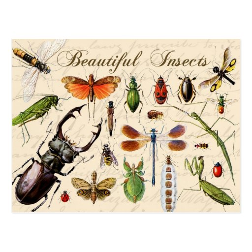 Insects - earth's most diverse organisms post cards