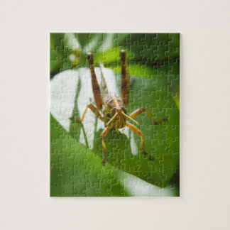 insects - Puzzles