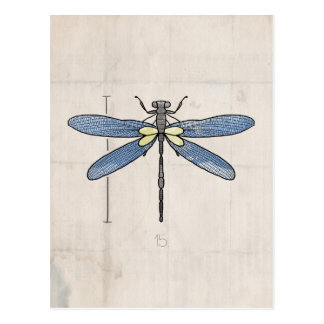 Insects Series- Dragonfly by VOL25 Postcards