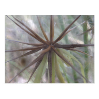 Inside A Dandelion Postcard