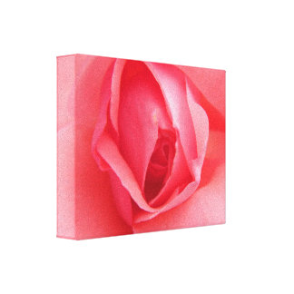 Inside A Pink Rose Canvas Print