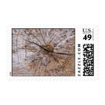 Inside a Tree Trunk Postage Stamps