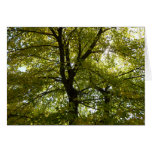 Inside a Yellow Maple Tree Autumn Nature Card