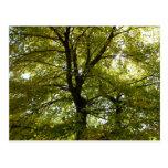 Inside a Yellow Maple Tree Autumn Nature Postcard