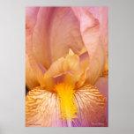 Inside an Iris Print