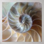 Inside Nautilus Poster
