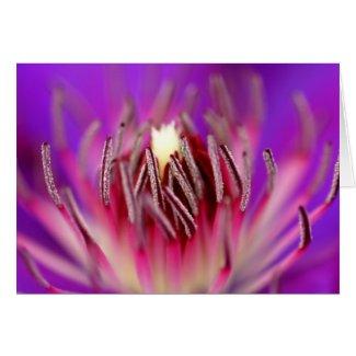 Inside of a flower