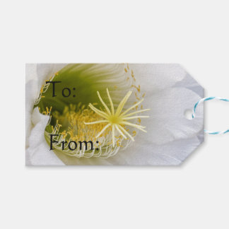 Inside of an Echinopsis in bloom Gift Tags