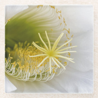 Inside of an Echinopsis in bloom Glass Coaster
