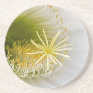 Inside of an Echinopsis in bloom Sandstone Coaster