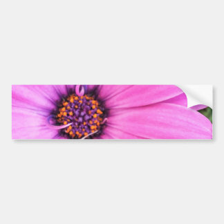 Inside of Pink Purple Gerbera Daisy Flower Nature Bumper Sticker