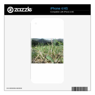Inside, the lush green grass sprouts everywhere skins for iPhone 4S