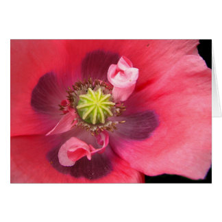Inside the Poppy Card