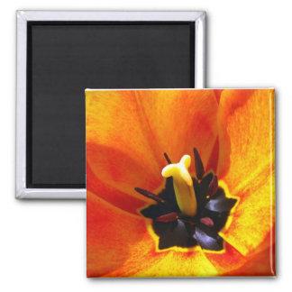 Inside Tulip Magnet
