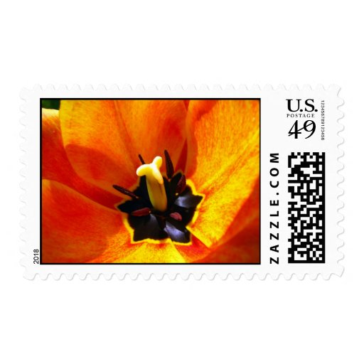 Inside Tulip Postage Stamps