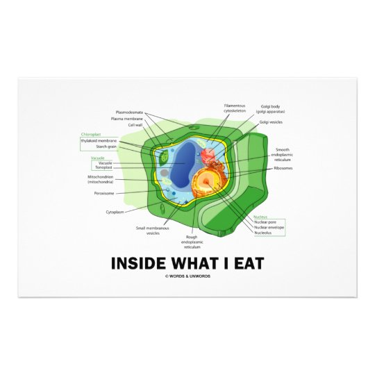 Inside What I Eat (Plant Cell Vegetarian Humor) Stationery