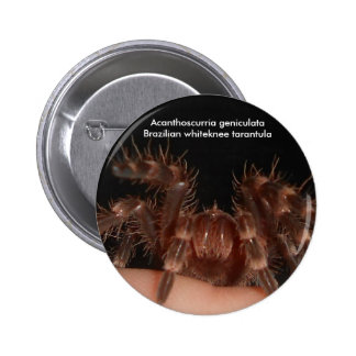 Insignia brasileña del tarantula del whiteknee pin redondo de 2 pulgadas