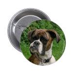 Insignia Brindle y blanca del botón del perro del  Pin