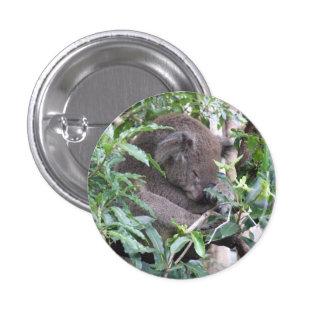 Insignia de la koala pin