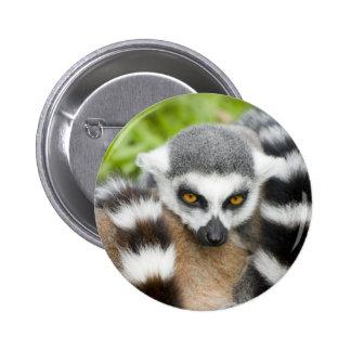 Insignia del botón - cola linda de Stripey del Pin Redondo De 2 Pulgadas