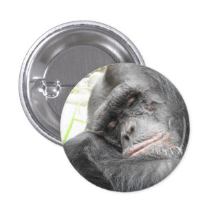 Insignia del chimpancé el dormir pin redondo de 1 pulgada
