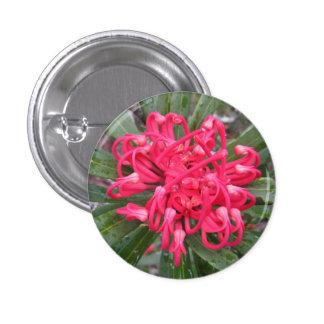 Insignia del wildflower de Waratah Pin Redondo De 1 Pulgada