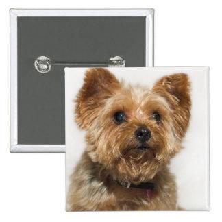 Insignia linda del botón del perro pin cuadrado