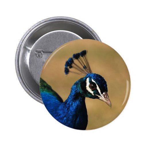 Insignias y botones adaptables del pavo real pins