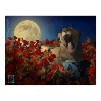 Insomnia Postcard