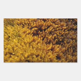 Inspección del musgo rectangular altavoces