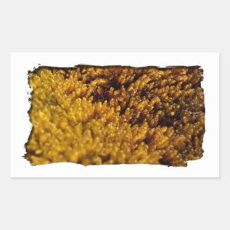 Inspección del musgo rectangular pegatina