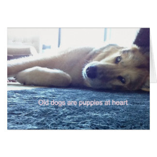 Inspirational Blank Note Cards - Old dogs