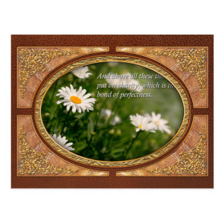 Inspirational - Daisy - Colossians 3-14 Postcard