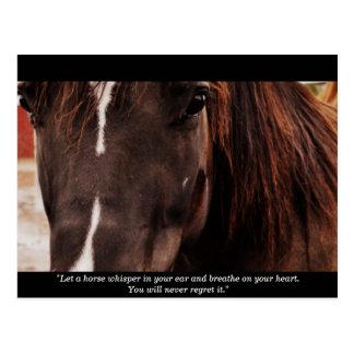 Inspirational Horse Postcard