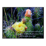 Inspirational PostCard - Cacti in Bloom