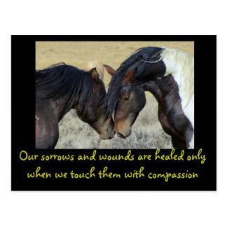 Inspirational Quote. Two Wild Horses Nuzzling Postcard