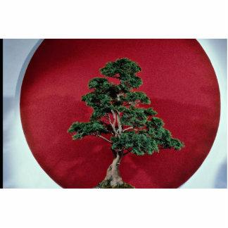 Inspiring Bonsai tree Cut Out