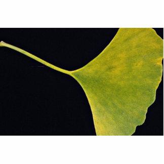 Inspiring Ginkgo leaf Photo Sculpture