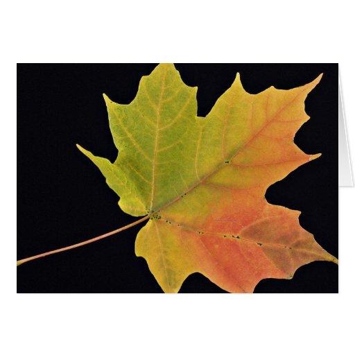 Inspiring Sugar maple leaf Cards